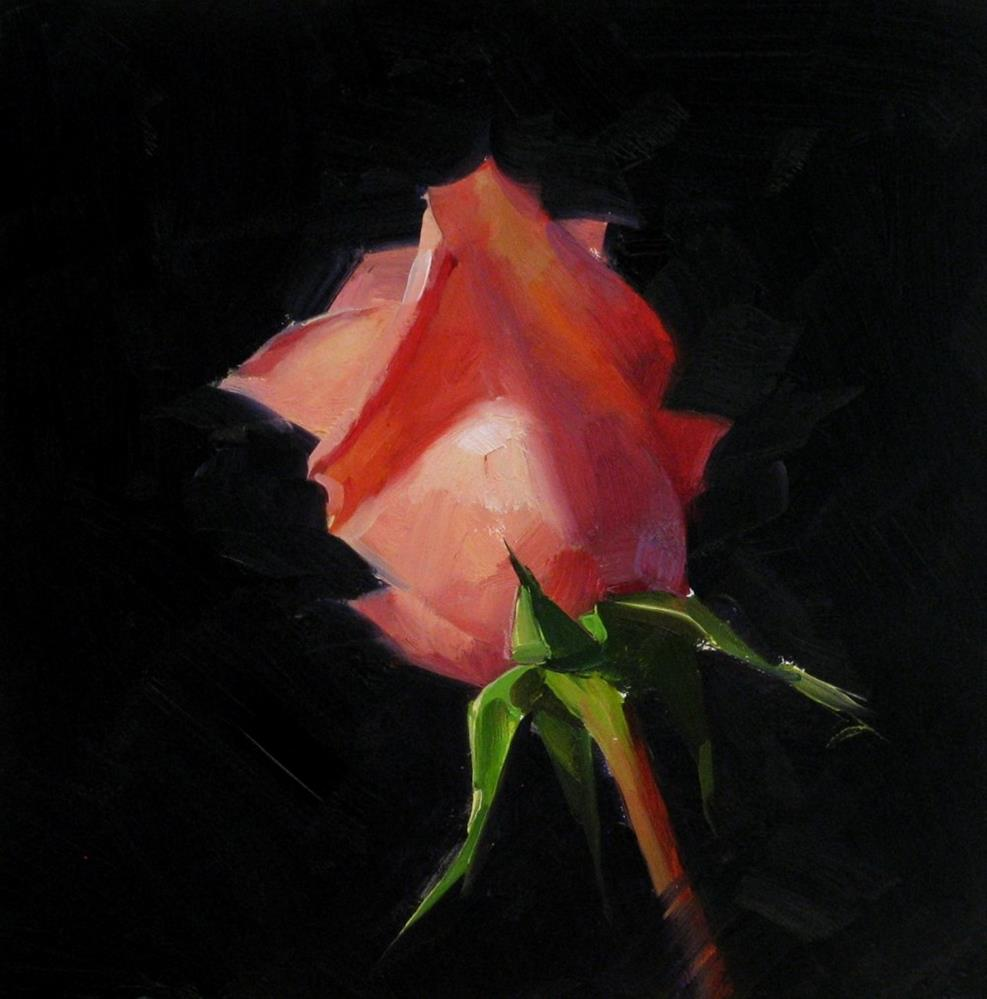 """Pink Rose Study 2"" original fine art by Qiang Huang"