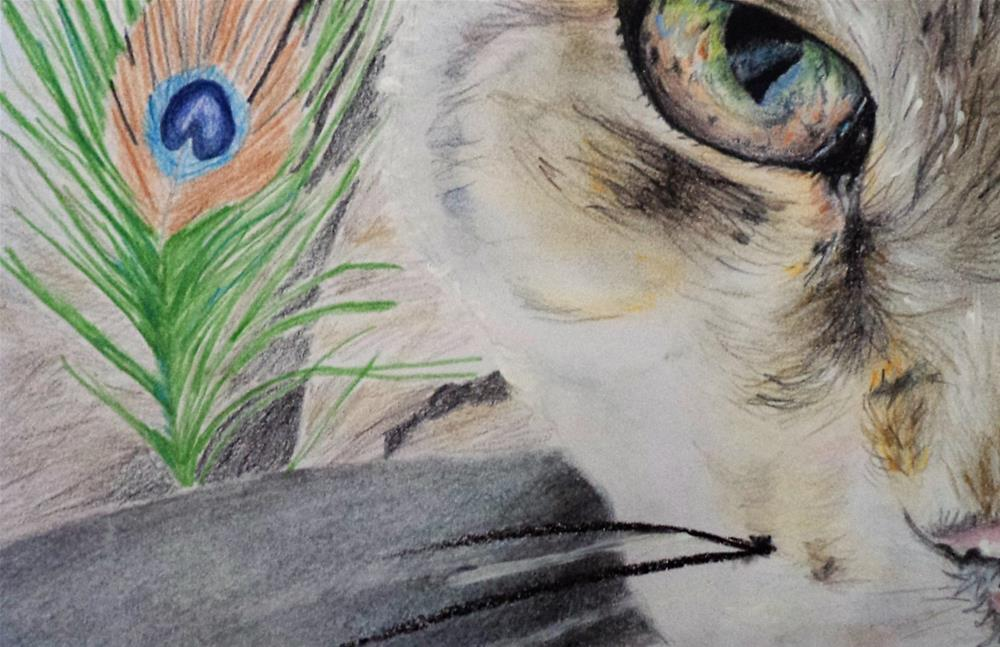 """Cat's eye hidding behind Peacock feather"" original fine art by tara stephanos"