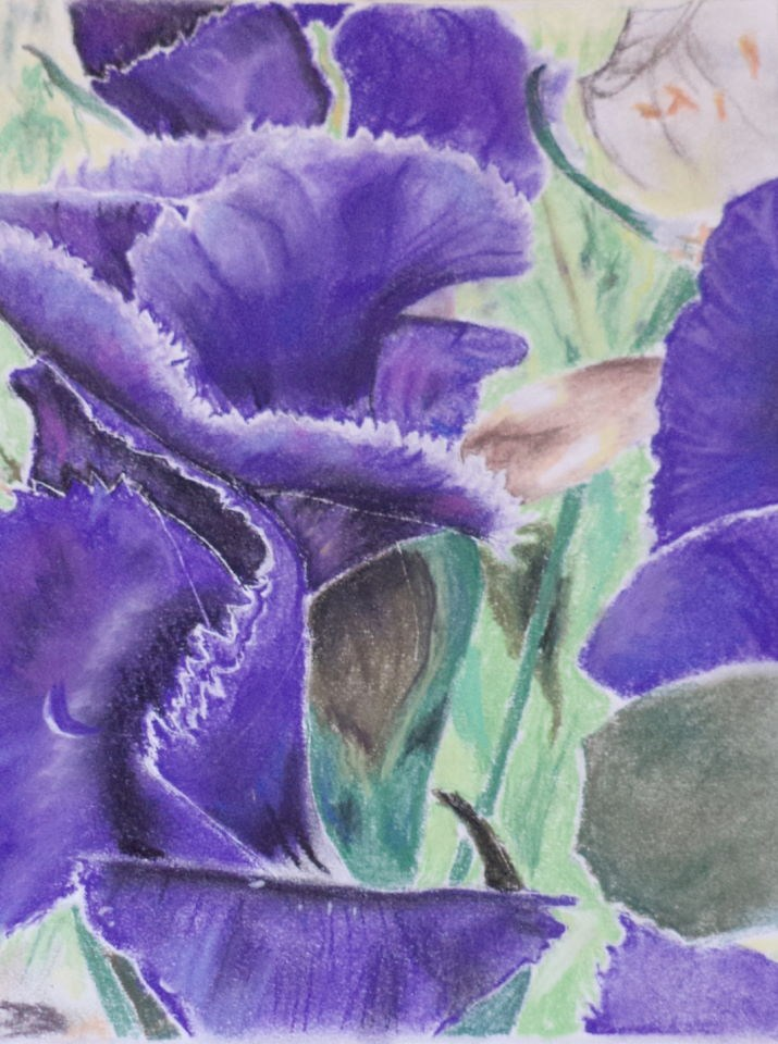 """Wild Purple Flowers Renewal"" original fine art by tara stephanos"