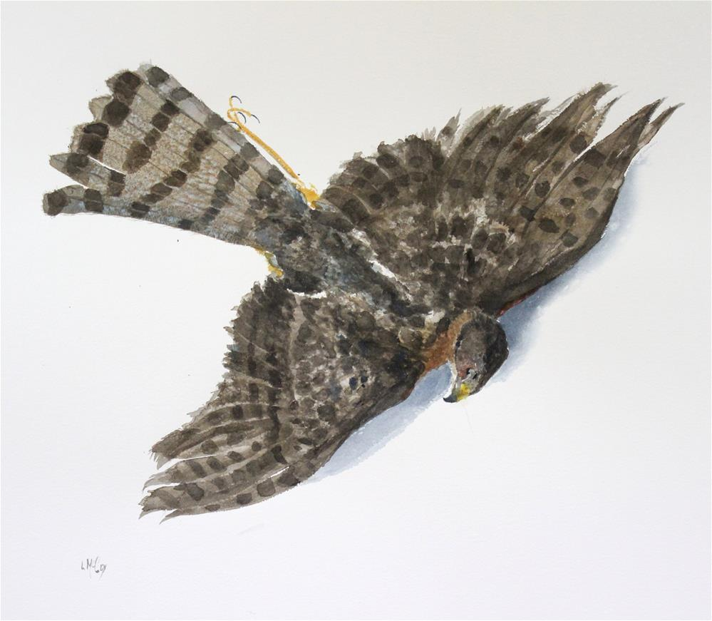 """Passage, Sharp Shinned Hawk, Watercolor"" original fine art by Linda McCoy"