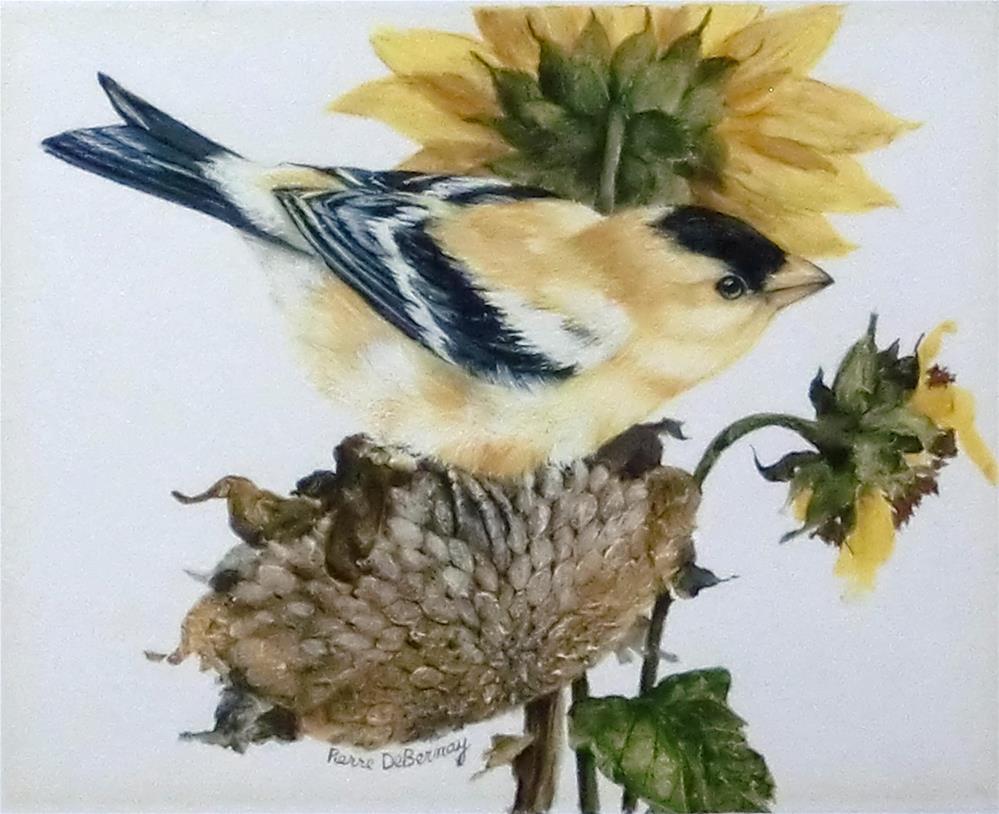 """""""American Goldfinch"""" original fine art by Jean Pierre DeBernay"""