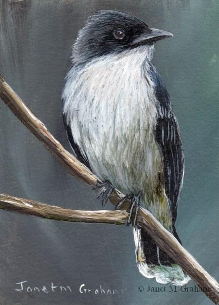 """Eastern Kingbird ACEO"" original fine art by Janet Graham"