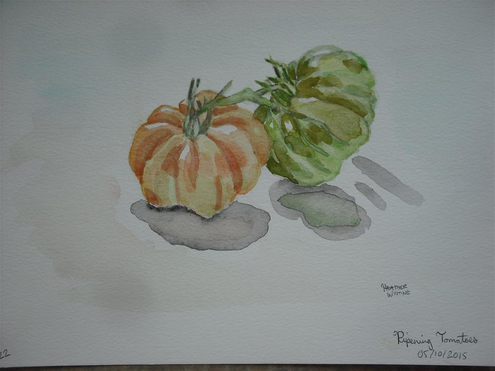 """Ripening Tomatoes"" original fine art by Heather Whiting"