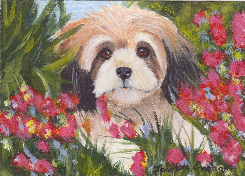 """Hiding in the Flowers ACEO"" original fine art by Janet Graham"