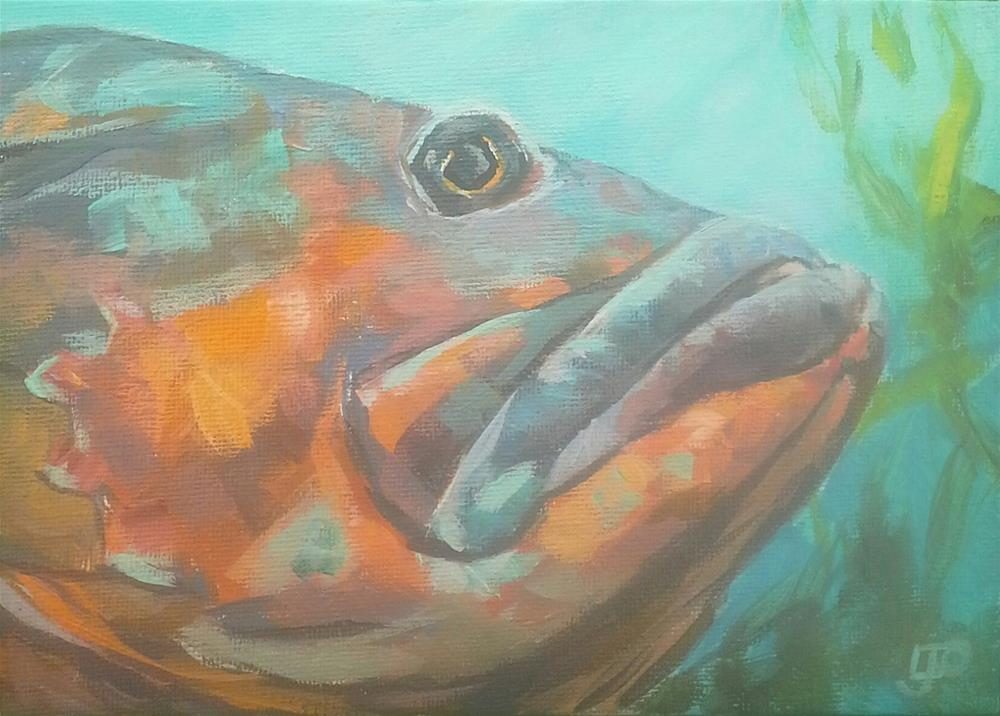 """Grumpy Groper"" original fine art by Leanne Owen"