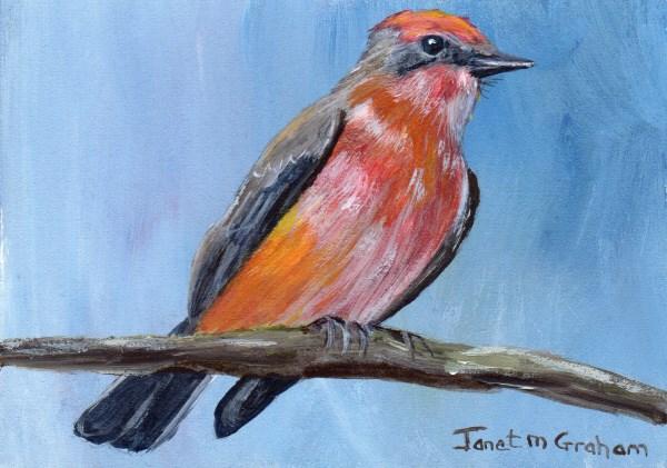 """""""Vermilion Flycatcher ACEO"""" original fine art by Janet Graham"""