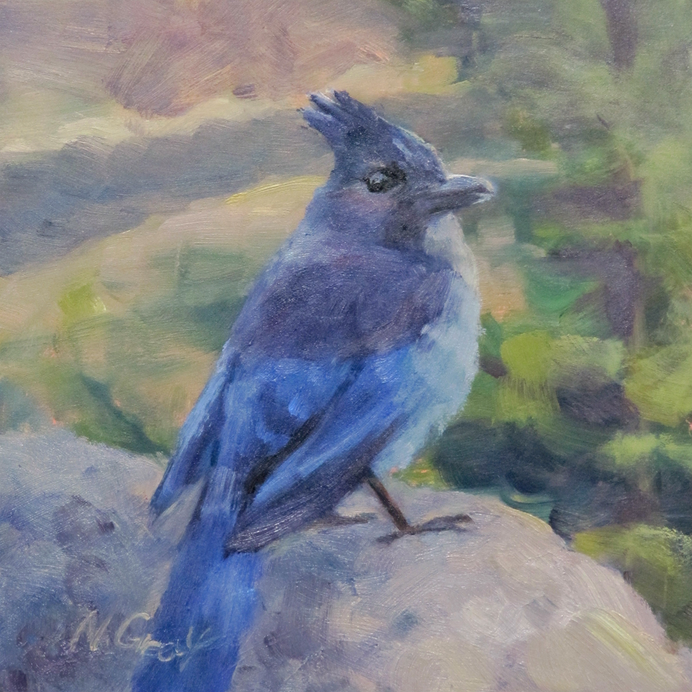 """Steller's Jay on the Rock"" original fine art by Naomi Gray"