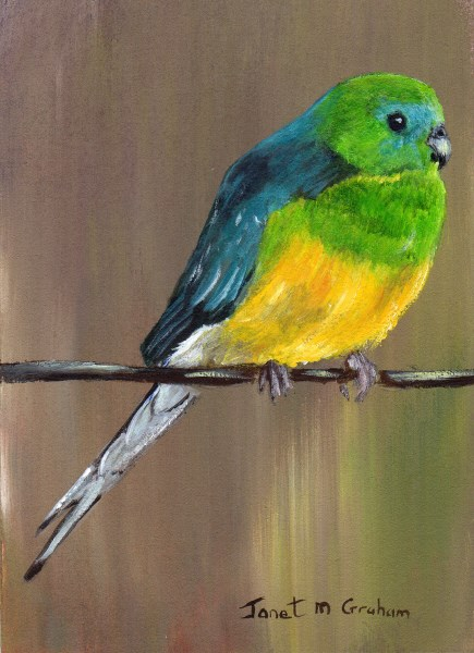"""Red Rumped Parrot ACEO"" original fine art by Janet Graham"