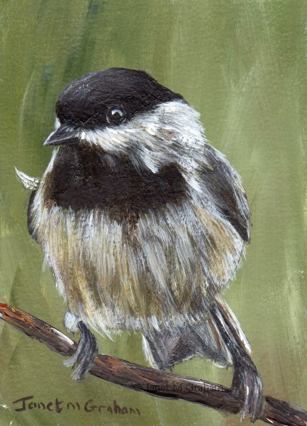 """Carolina Chickadee ACEO"" original fine art by Janet Graham"