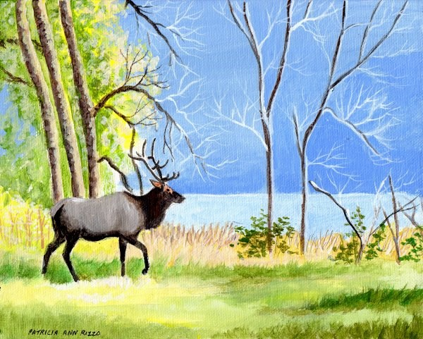 """Elk"" original fine art by Patricia Ann Rizzo"