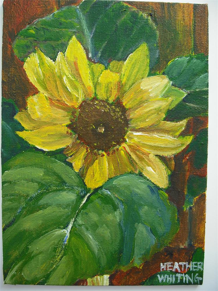 """Music Box Sunflower"" original fine art by Heather Whiting"
