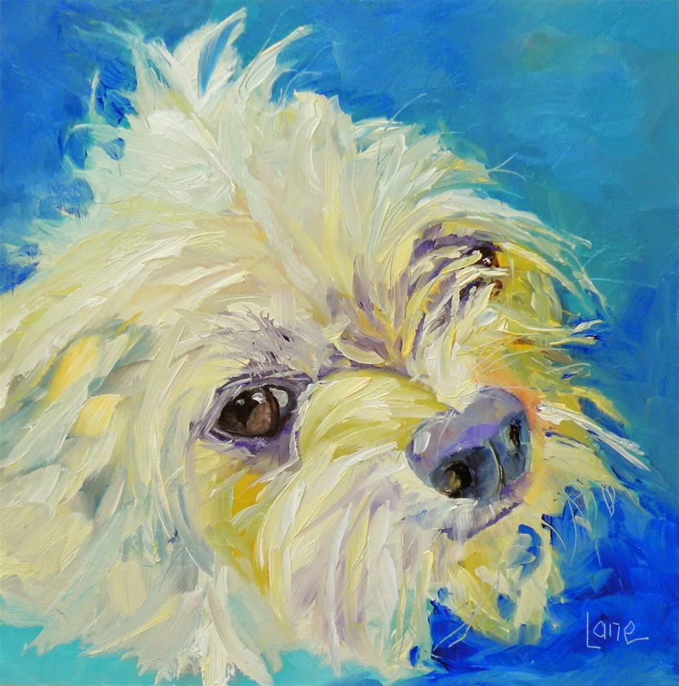 """RUFUS 83/101 OF 101 PET PORTRAITS IN 101 DAYS © SAUNDRA LANE GALLOWAY"" original fine art by Saundra Lane Galloway"