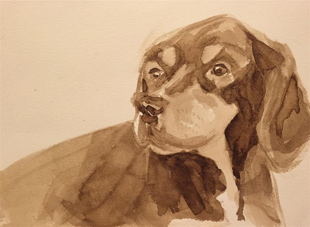 """Boomer in walnut ink"" original fine art by Cindy McDonough"