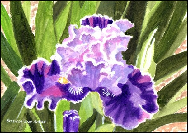 """Deep Purple Iris"" original fine art by Patricia Ann Rizzo"
