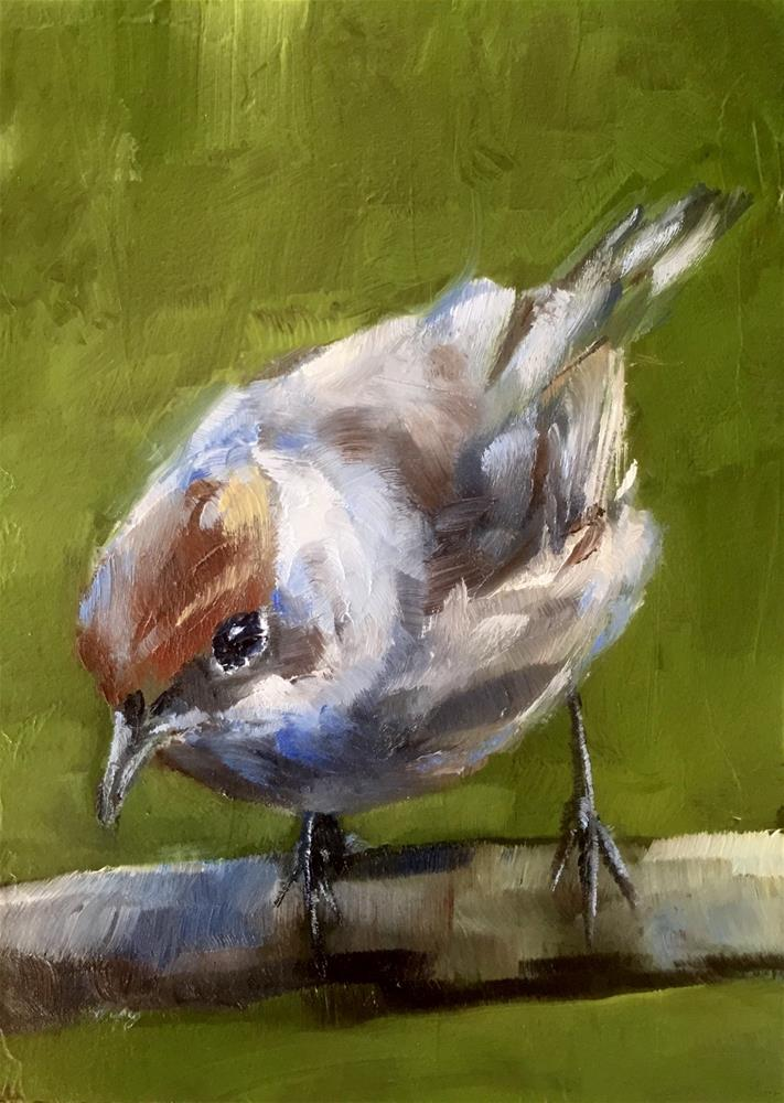 """Female Blackcap "" original fine art by Gary Bruton"