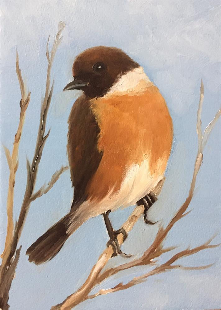 """Stonechat"" original fine art by Carole Chalmers"