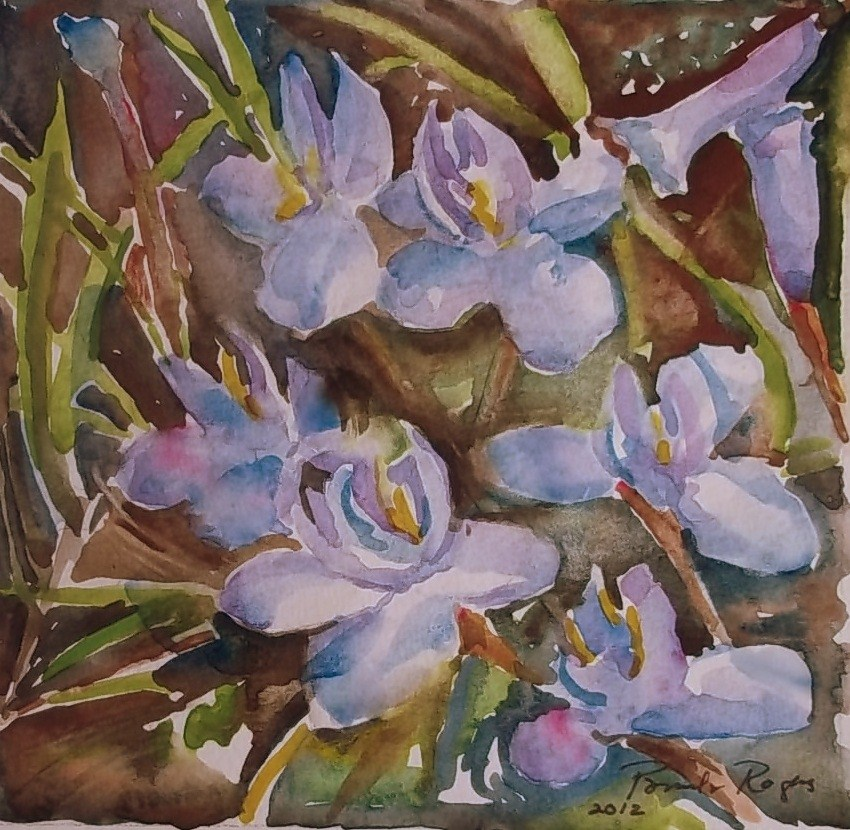 """Wild Iris 2013"" original fine art by Pamela Jane Rogers"