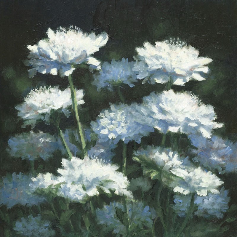 """Scabious in White"" original fine art by Linda Jacobus"