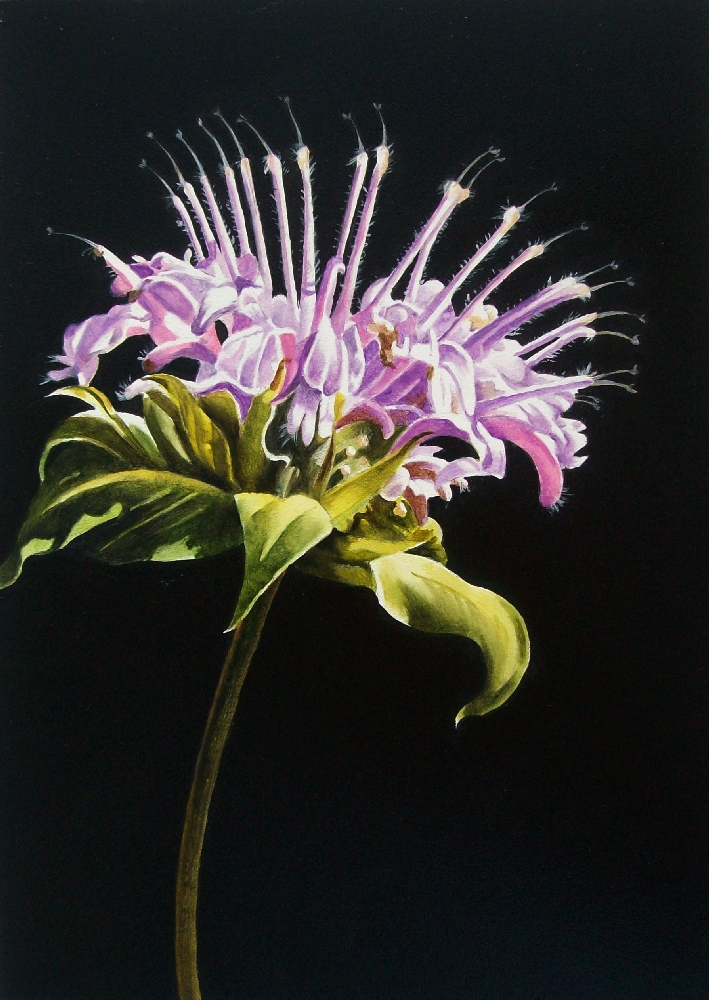 """Bee Balm"" original fine art by Jacqueline Gnott, whs"