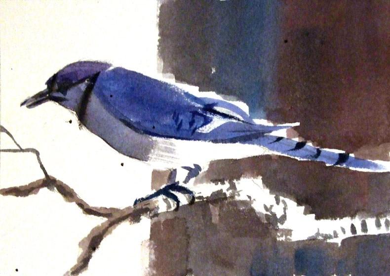 """Bluejay no. 1"" original fine art by Jeff Atnip"