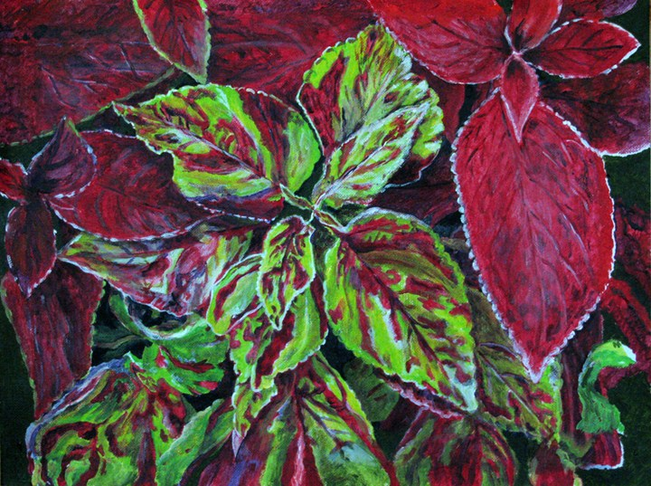 """Coleus"" original fine art by Nan Johnson"