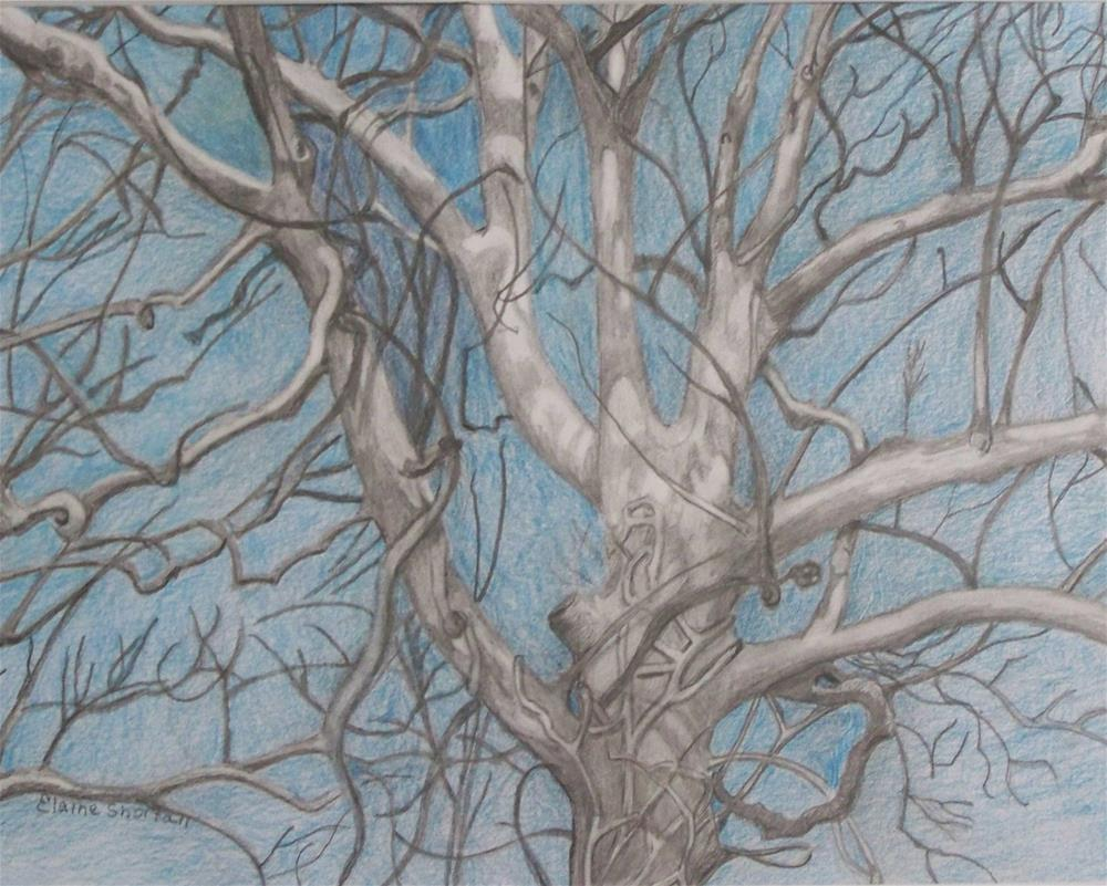 """Sycamore on a Winter's Morning (Framed)"" original fine art by Elaine Shortall"