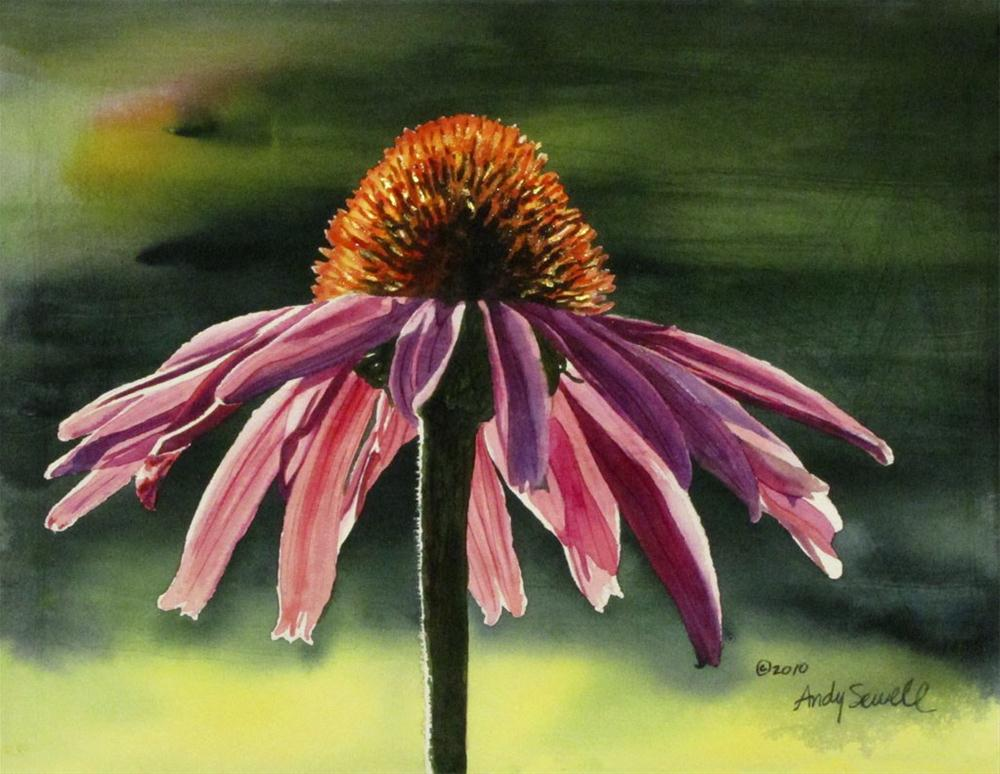 """Echinacea"" original fine art by Andy Sewell"