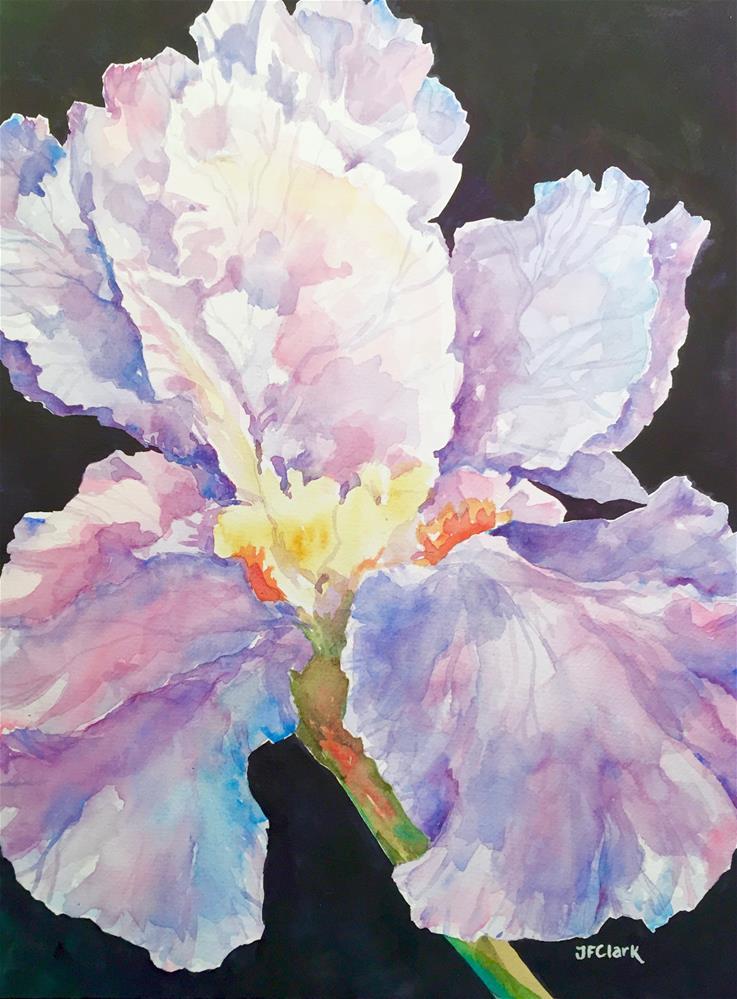 """""""Moonlit Iris"""" original fine art by Judith Freeman Clark"""