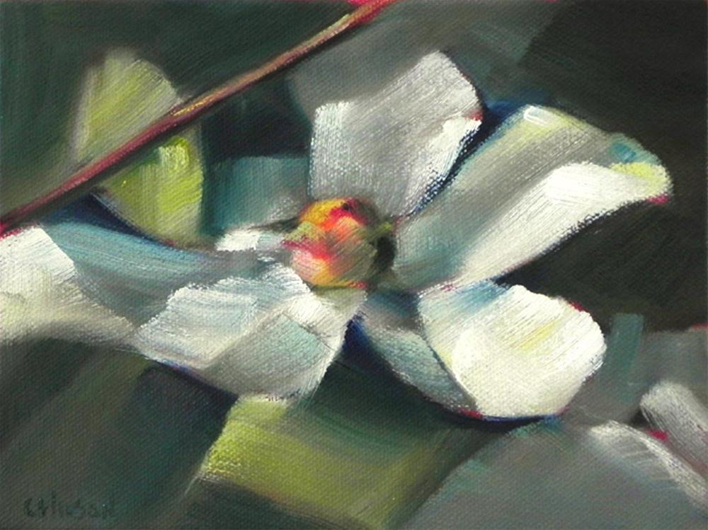 """Dogwood"" original fine art by Cheryl Wilson"