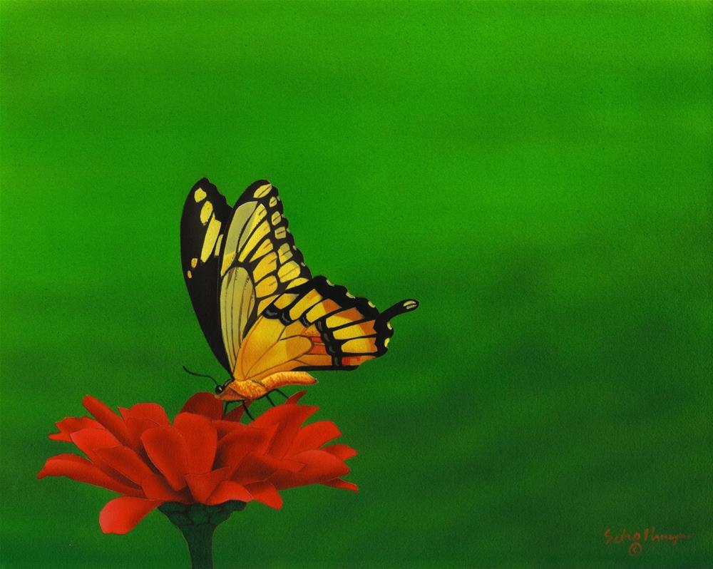 """Swallowtail & Zinnia"" original fine art by Fred Schollmeyer"