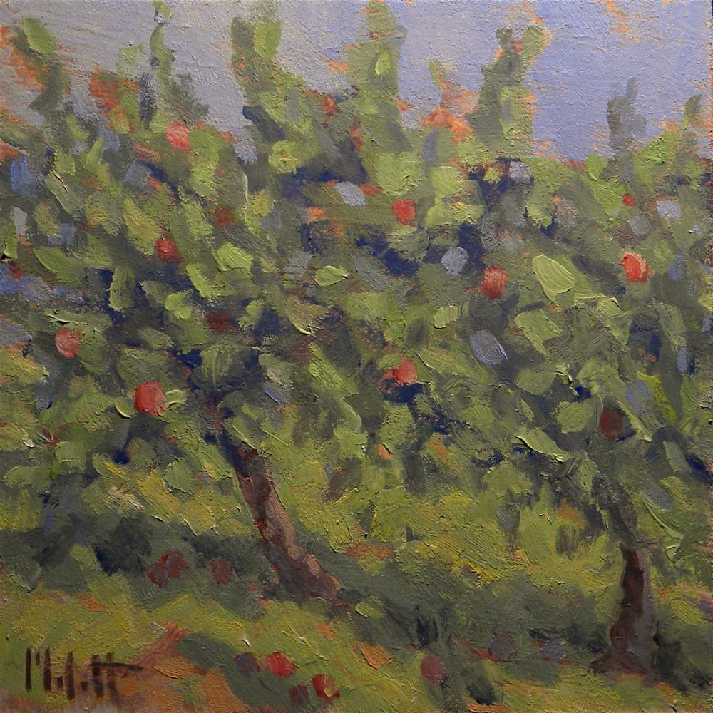 Fruit Trees Apple Orchard Oil Painting Contemporary Impressionism original fine art by Heidi Malott