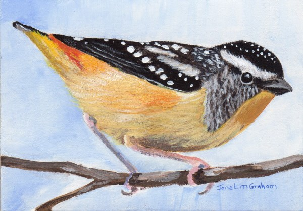 """Spotted Pardalote ACEO"" original fine art by Janet Graham"