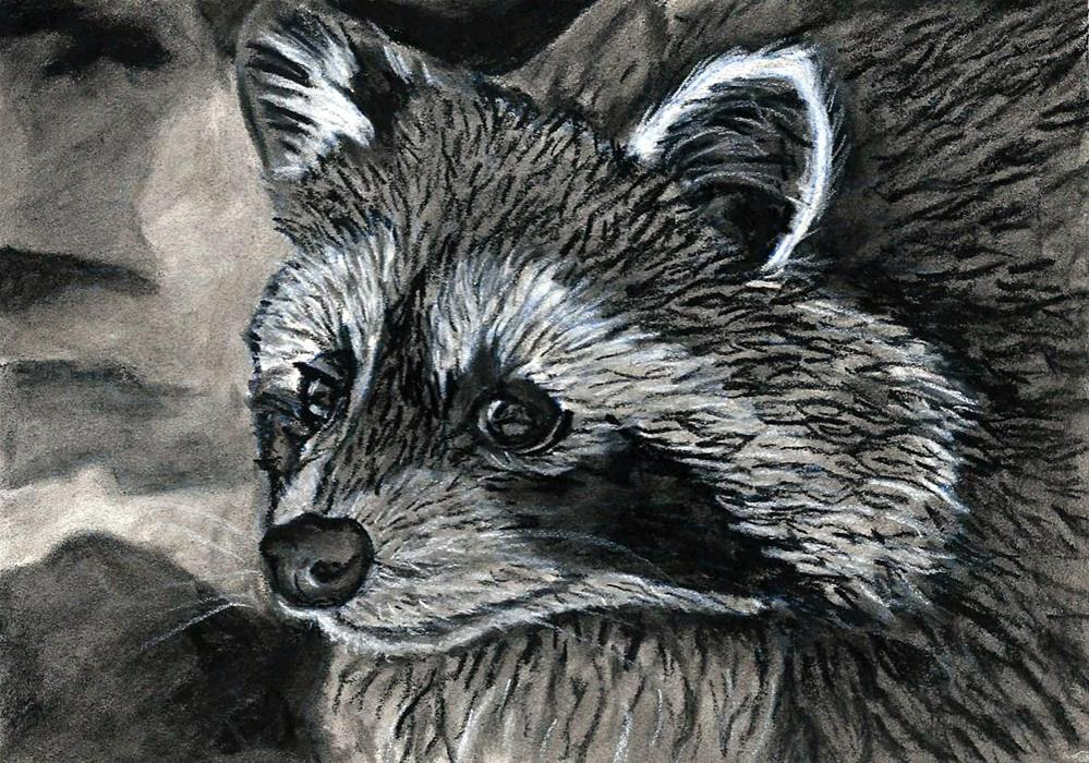 """Raccoon Study"" original fine art by Lisa Wiertel"