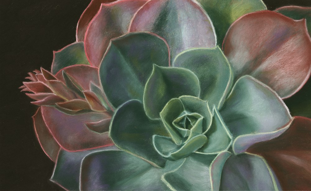 """Succulents"" original fine art by Susan Fern"