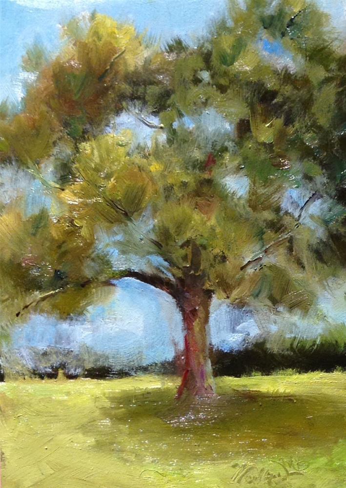 """Scrubby Pine"" original fine art by Dorothy Woolbright"