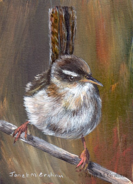 """Marsh Wren ACEO"" original fine art by Janet Graham"