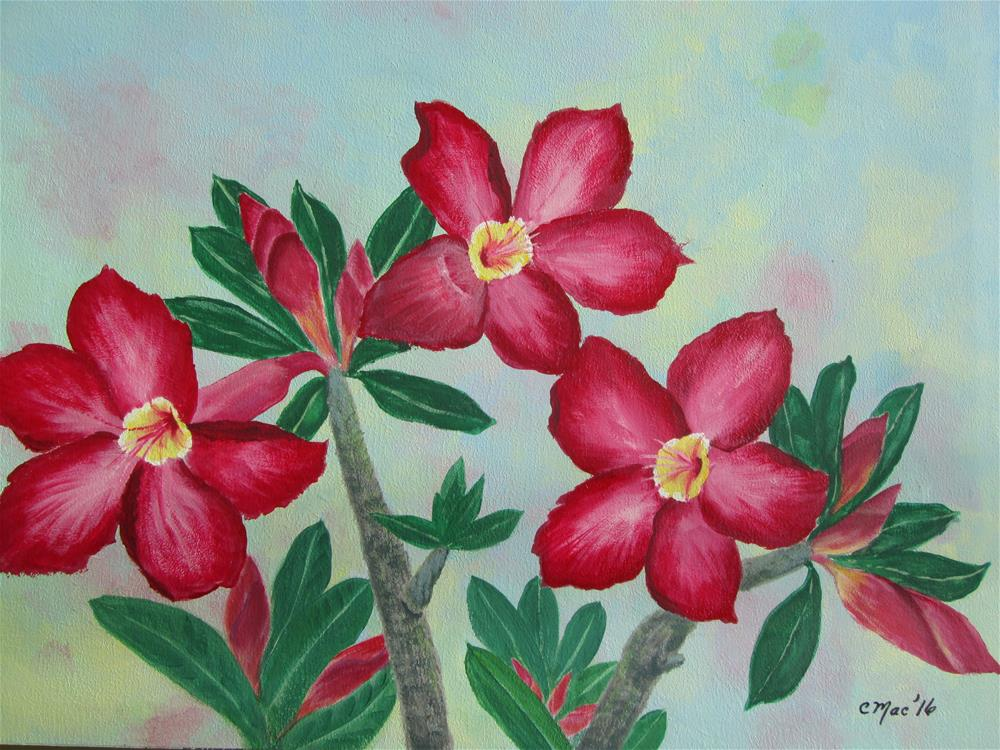 """Spectacular Desert Rose"" original fine art by Chris MacCormack"