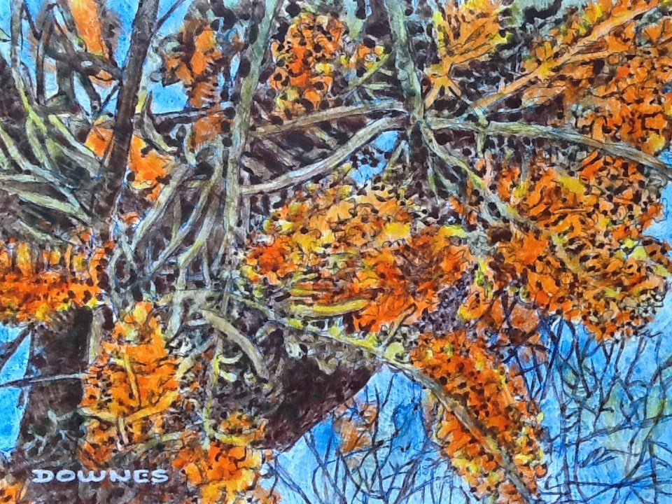 """023 GREVILLEA 2"" original fine art by Trevor Downes"