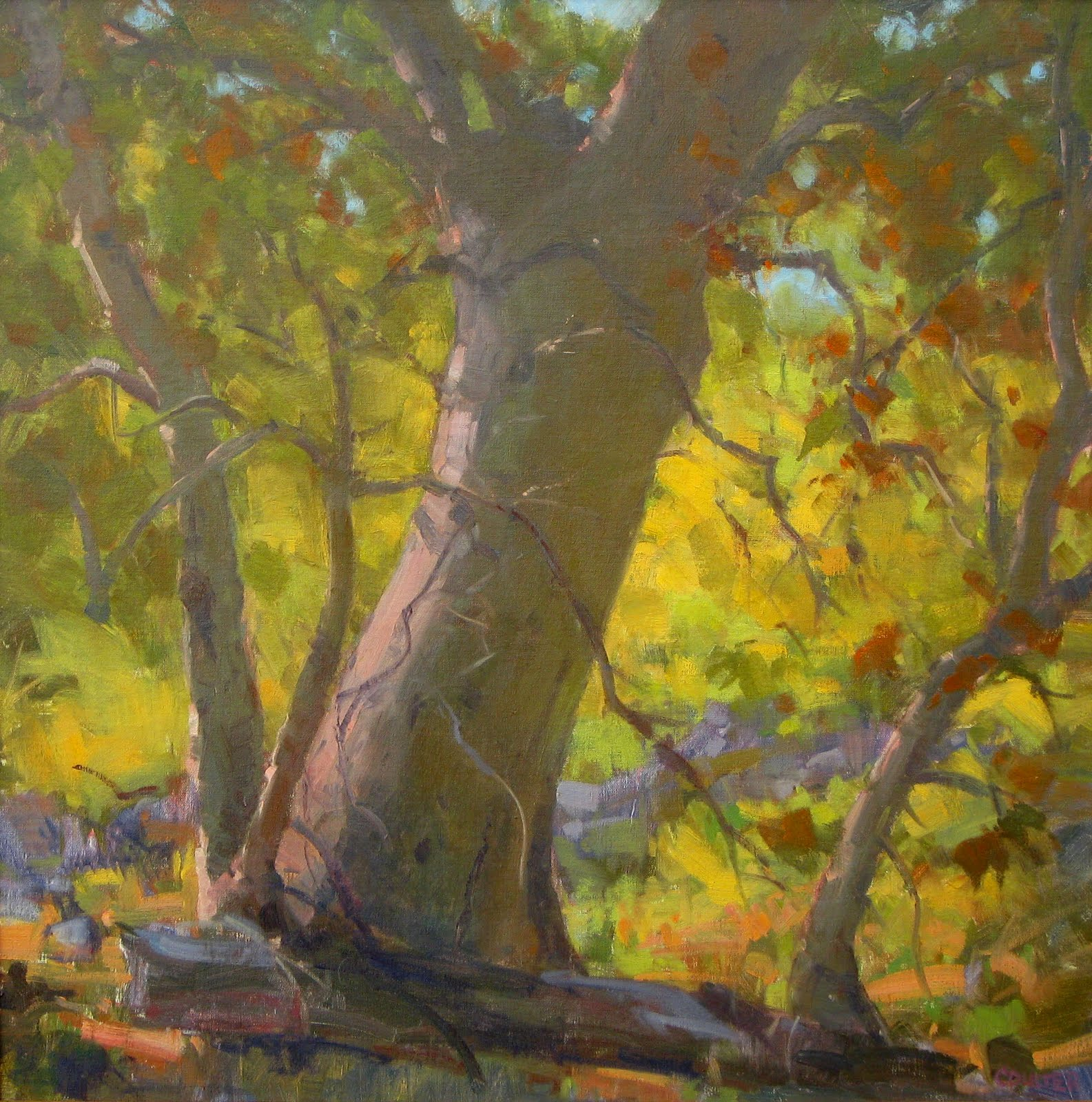 """SYCAMORE"" original fine art by James Coulter"