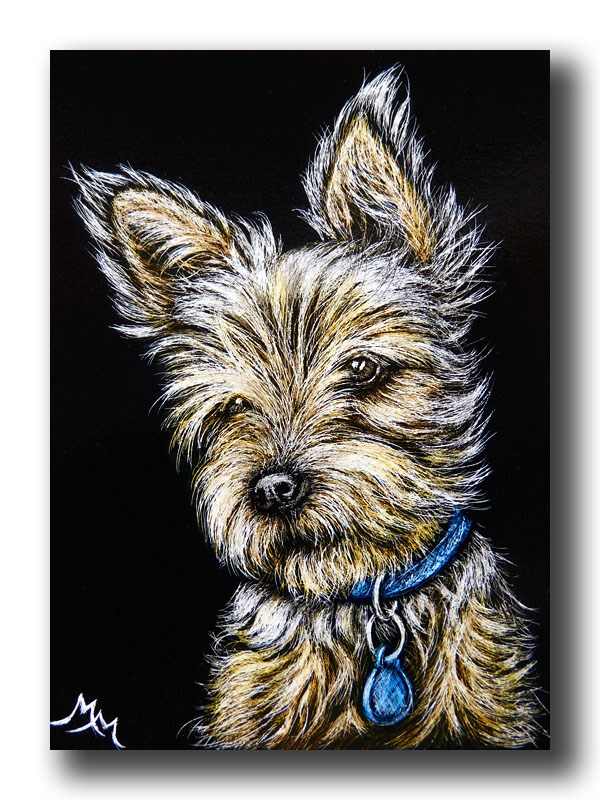 """Yorkie"" original fine art by Monique Morin Matson"