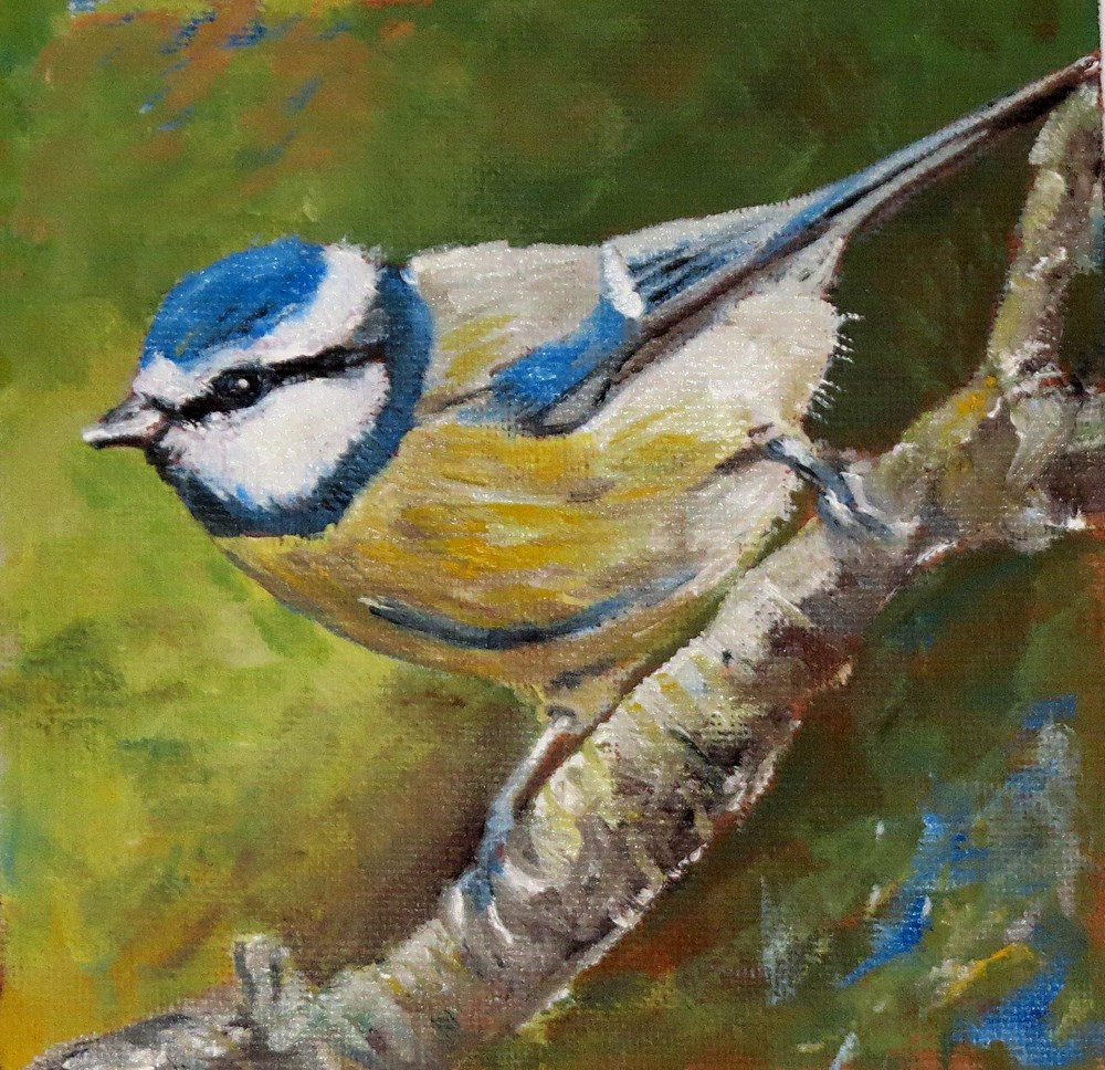 """Blue Tit"" original fine art by Susan  Mackenzie"