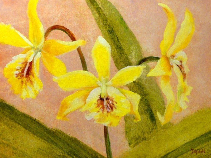 """Yellow Orchid Triplets"" original fine art by Dalan Wells"