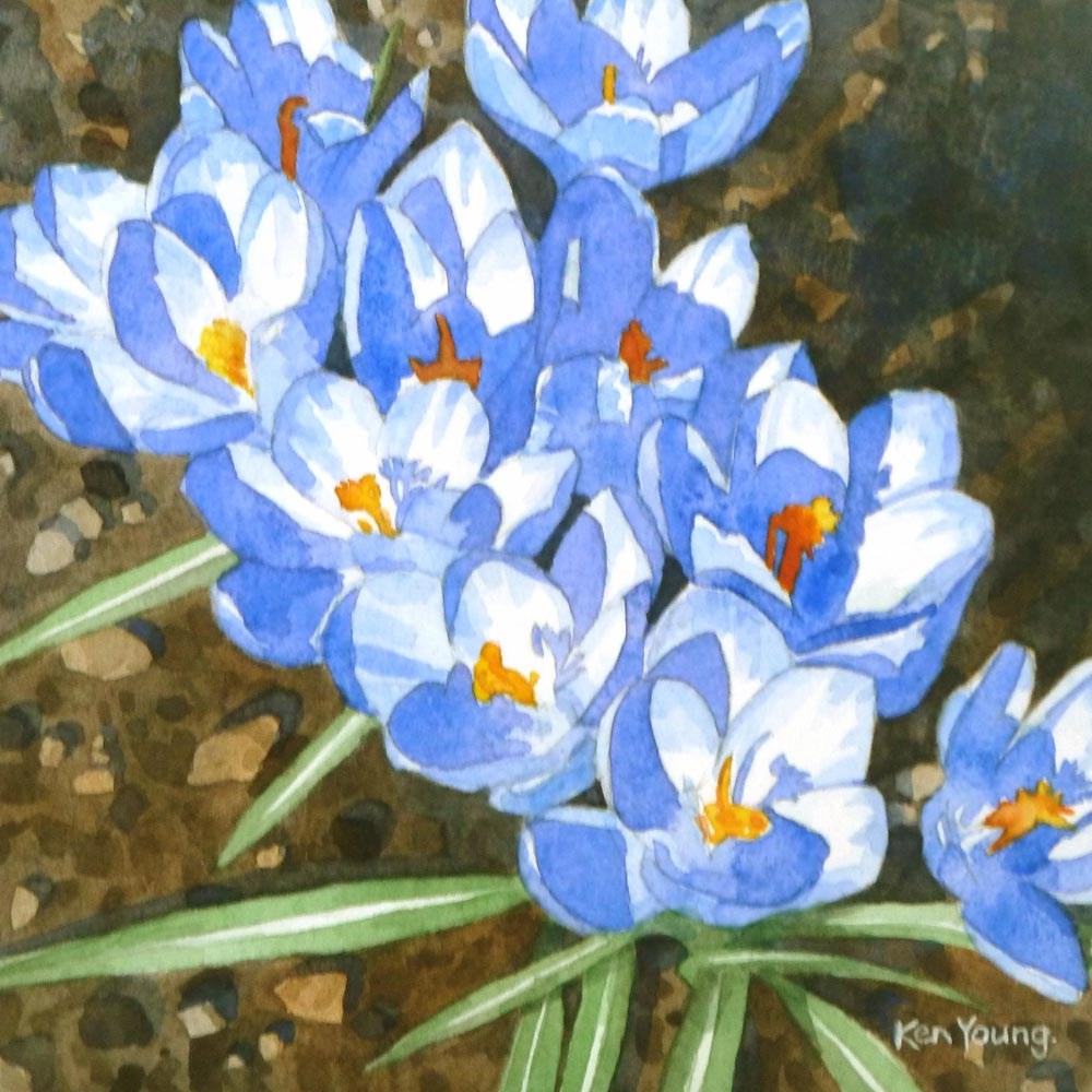 """Blue Crocuses"" original fine art by Ken Young"