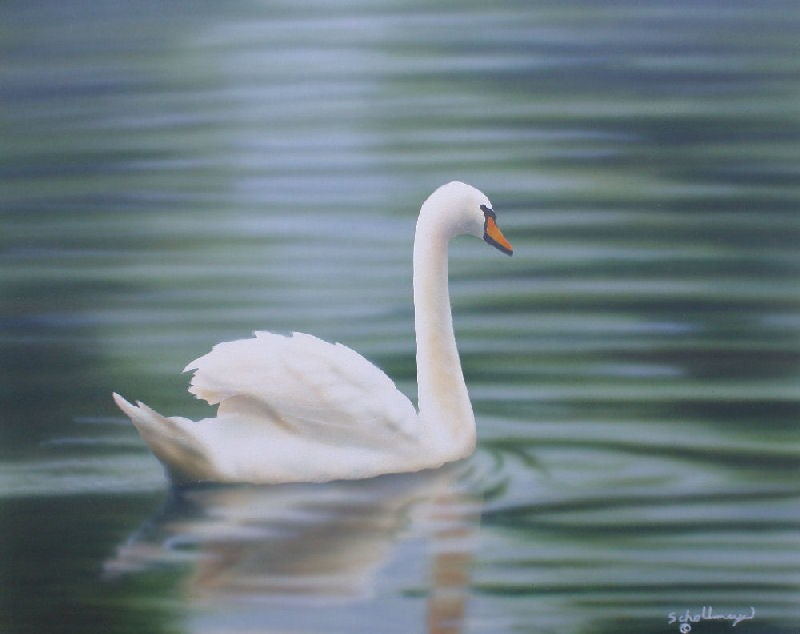 """A Swan's Song"" original fine art by Fred Schollmeyer"