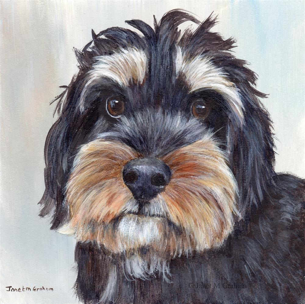 """Adorable Schnoodle"" original fine art by Janet Graham"