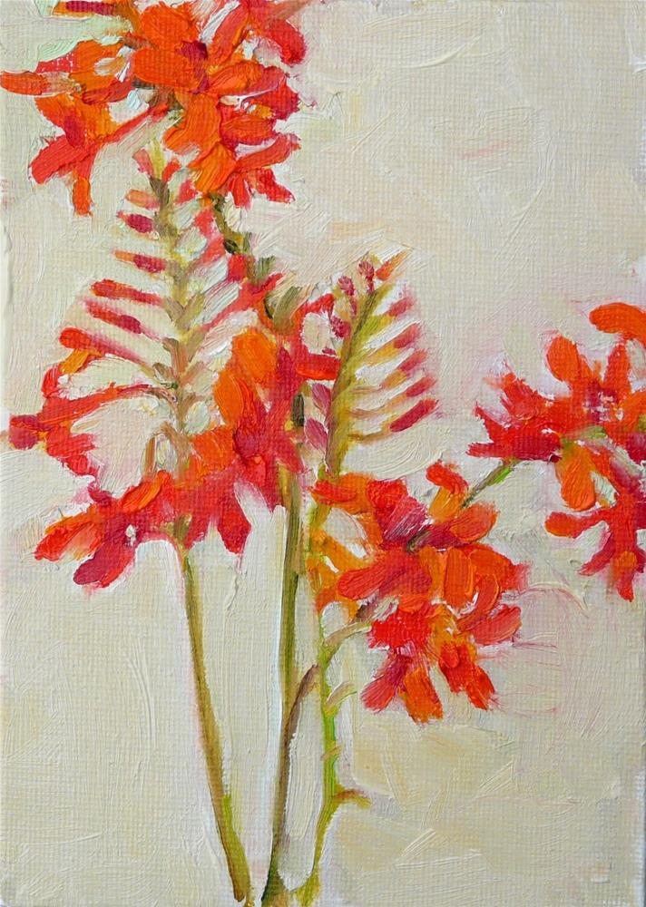 """Fire King Crocosmia,still life,oil on canvas,7x5,price$175"" original fine art by Joy Olney"