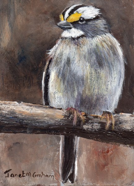 """White Throated Sparrow ACEO"" original fine art by Janet Graham"