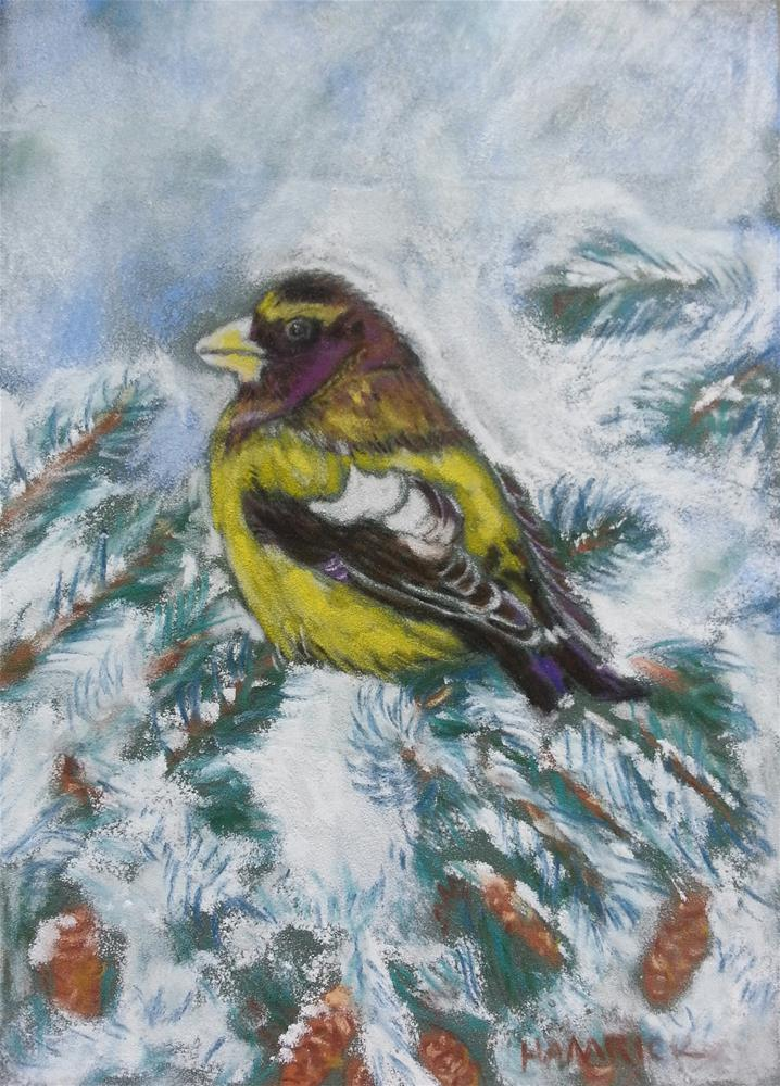 """Evening Grosbeak"" original fine art by Phyllisha Hamrick"