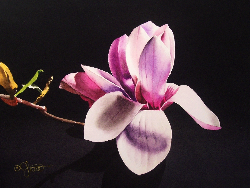 """Purple Magnolia"" original fine art by Jacqueline Gnott, whs"