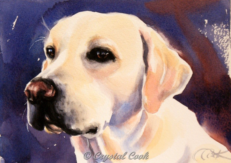 """Sweet and Mellow"" original fine art by Crystal Cook"